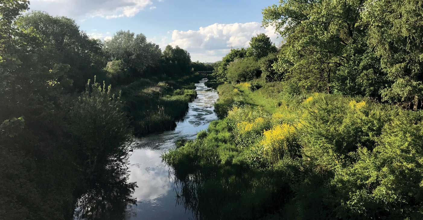 River-Roding-May-2019-3--(c)-Anna-MacLaughlin