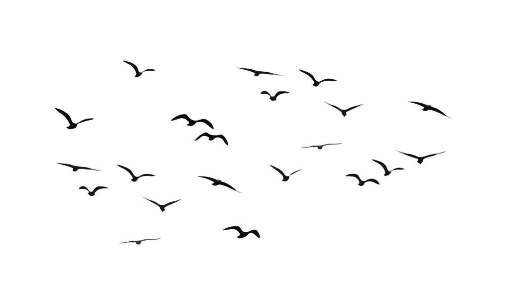 -birds-1024x614