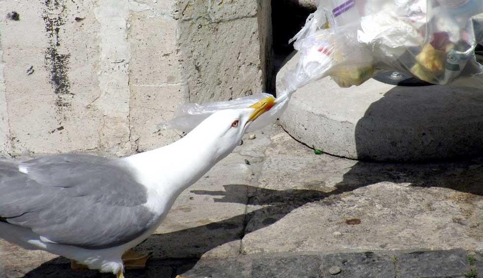 seagull-2259288_1280